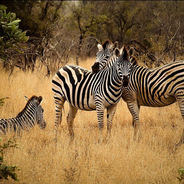 Savana em África